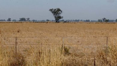 Review of the agricultural deposit system to see if it is resilient or a tax planning tool