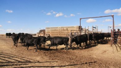 Tax planning: Think ahead when selling calves early, market more cows