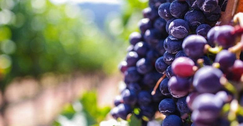 Lincoln urges winery tax breaks at provincial conference